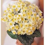 Kız İsteme Çiçeği ve fiyatları
